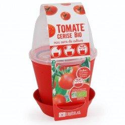 Pot cloche Tomate cerise Bio